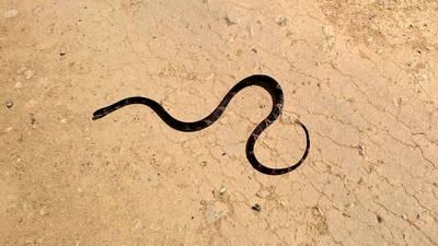 Ding, dong: 4-foot rat snake rings Kansas man's doorbell