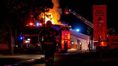 Orlando pet shelter fire: 23 cats killed in blaze, officials say
